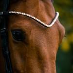 PS of Sweden Sleek Gold leather browband