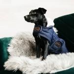 Kentucky dogwear pearls dog coat - Navy