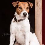 Kentucky dogwear dog collar 'triangle'