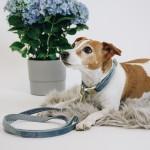 Kentucky dogwear Velvet collection dog lead - Light Blue