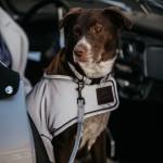 Kentucky dogwear Reflective dog lead