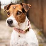 Kentucky dogwear Velvet collection dog Collar - Old Rose