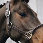 Kentucky Horsewear Anatomic leather headcollar